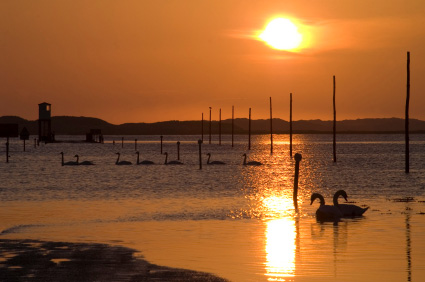 Sunrise and swans at Holy Island