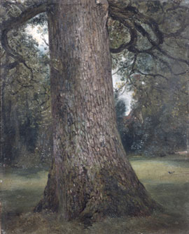 Study of an elm tree