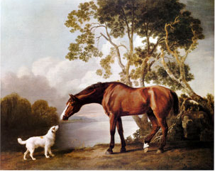 White dog and bay horse touching noses