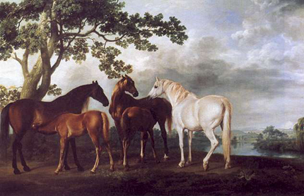 Mares and colts under trees