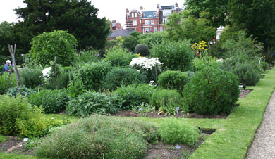 Beds in Chelsea Physic Garden