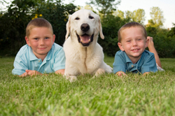 Two boys and dog