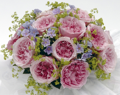 Bouquet of pink roses and lady's mantle