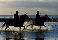 horses and riders in sea