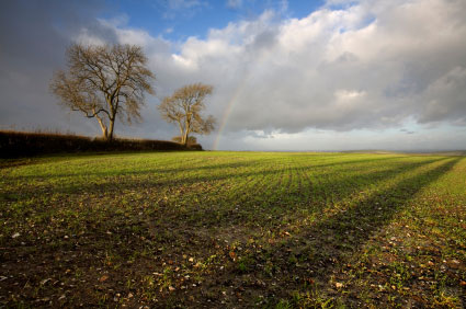 albion_autumn_fields_dorset.jpg