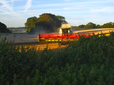 albion_combining_south_downs_sept_12.jpg