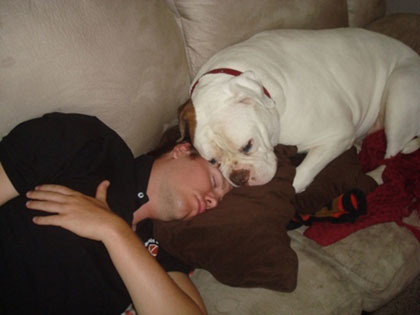 blog_american_bulldog_sleep.jpg