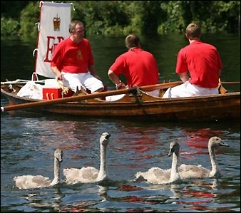 blog_swan_upping.jpg