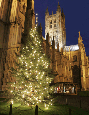 Canterbury Cathedral and lit Christmas tree at night with nativity creche